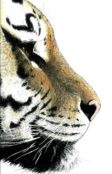 Tiger Profile Realistic by SethWolfshorndl