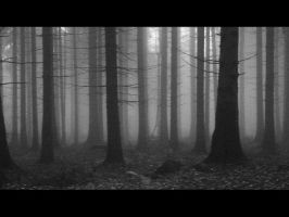 Foggy November by majkl776