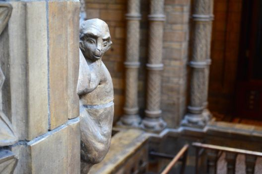 One of the NHM Monkeys by AffMeakin