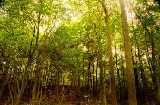 early autumn woods by picturingjules