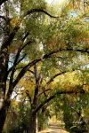 Its FALL I by 1001G