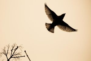 Bird by BIREL