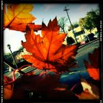 Orange Urban Leaf by ycrad64