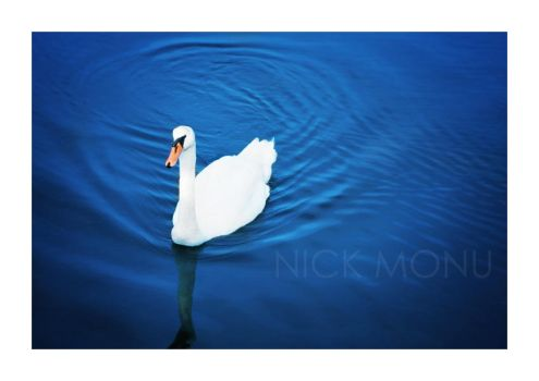 Le cygne by nico-blue