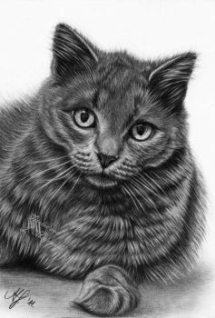 Kitty drawing by titol87