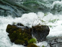 Rogue River Stock 6 by Carol-Moore