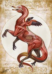 Griffin Anatomy- Natural History of the Fantastic by Christopher-Stoll
