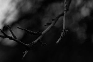 Branch by mprangenberg