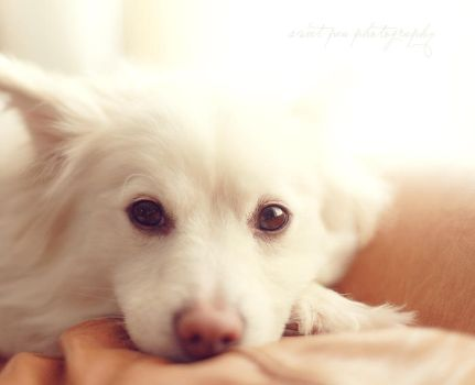 Photohunt: Soft by SweetPeaPhototc