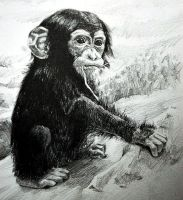 Baby Chimp by KingVahagn