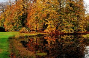 Another autumnal colour festival by jchanders