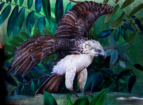Philippine eagle by chinchillacosmica