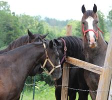 Multiple Horses 33 by MountainViewStock