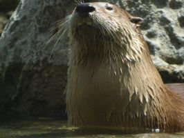 Proud to be a River Otter by MissMachineArt