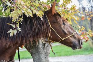 yearling colt by CottonCandyHorse