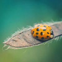 Little Creatures 106 by Frank-Beer