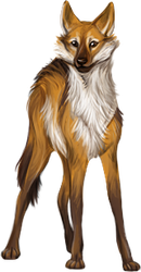 Companion: Maned Wolf by reviro