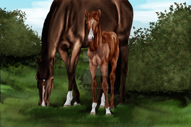 OVEC Van Sul - Foal by SageSinRiddle