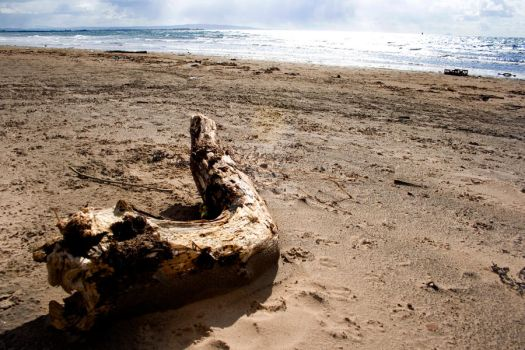 Driftwood. Colour. by SHIT-face-sheree