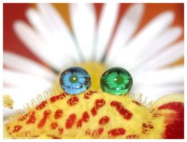 Eyes of the hairy droplet-frog by Kerry1983