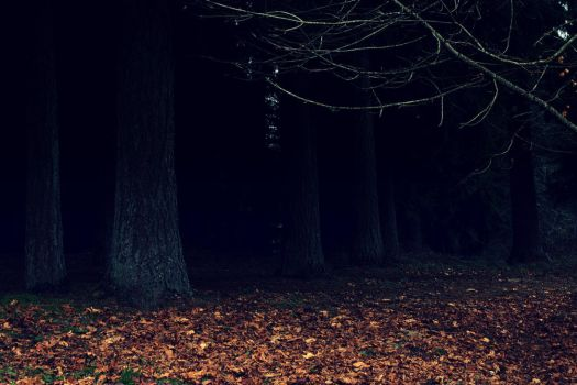 Dark Woods Wallpaper by designerfied