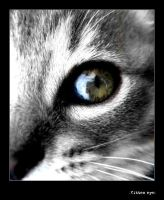 -+- Cats eyes -+- by mbqlovesottawa