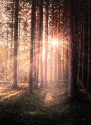 The forest of light by streamweb