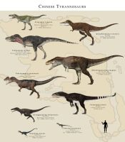Chinese Tyrannosaurs by PaleoGuy