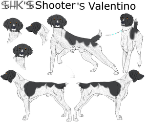 SHK's Shooter's Valentino by IcyMountainKennels