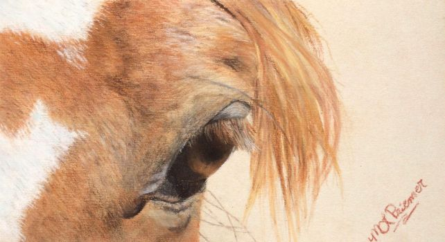 Horse Eye_Soul Searching_Available for Purchase by monettle