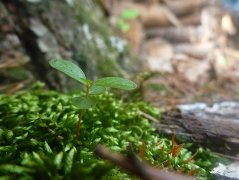 The Plant in the Moss by NatureGuide