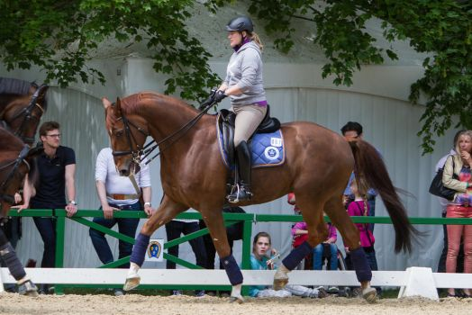 Chestnut Dressage Horse Nice Trot by LuDa-Stock
