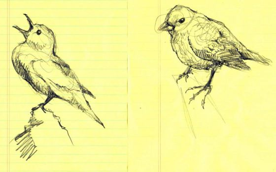 Bird Study VII and VIII by timbroadwater