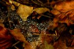 Drops on web in autumn by LoveForDetails