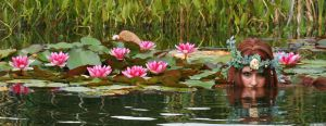 Water Lilies 03 by MarjoleinART-Stock