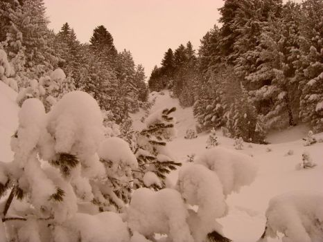 Snow in Brezovica by blackdevilbd