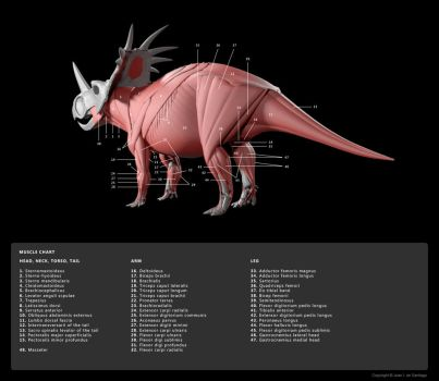 Muscle Diagram 4 by Red-Dilopho