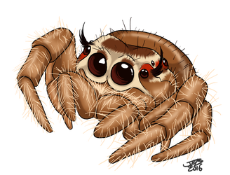 Cute Jumping Spider by ProdigyDuck