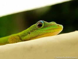 Gold dust day gecko 16 by kitty974