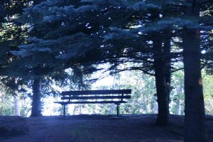 the open bench by knilvrie
