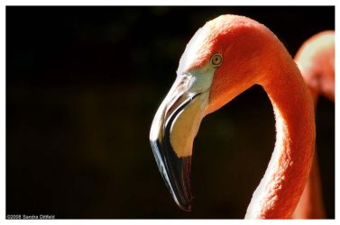 Flamingo 2 by grugster