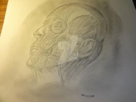 Muscles of a head.. by sarahbrightmanfan