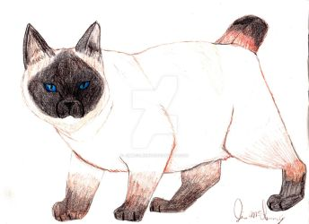 manx siamese Cyndy by jimmcclenny