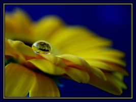 Not So Mellow Yellow.... by Pjharps