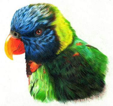 Colorful Parrot by Ponsho
