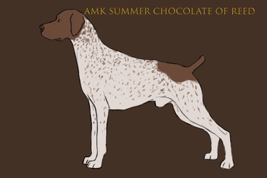 AMK's Summer Chocolate of REED 'Gunther' by doggolard