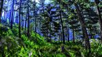 Boreal Forest 4K Wallpaper by ROGUE-RATTLESNAKE