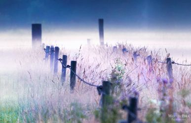 In the mists V by WouterPera