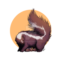 Skunk by roryink