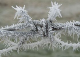 Frost on Barbed Wire by johnford101